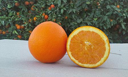 arance-sicilia-navel-igp