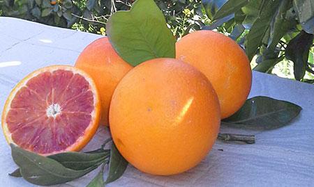 arance-sicilia-tarocco-spremuta-igp